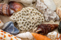 Free Ocean Shell Background Royalty Free Stock Image - 29513966