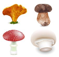 Free Mushrooms Royalty Free Stock Photography - 29515267