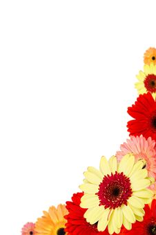 Free Bouquet Of Gerber Flowers On White Background Royalty Free Stock Image - 29537106