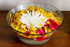Chrysanthemum With Petals In A Vase With Water Royalty Free Stock Photo