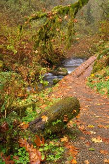 Free Leaves Fall In Autumn On A Trail In The Rainforest Stock Photography - 29541932