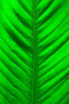 Free Fresh Green Leaf Royalty Free Stock Photos - 29545138