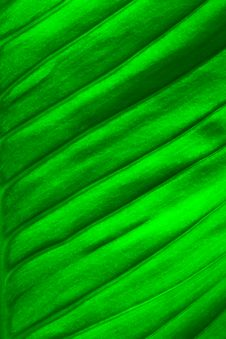 Free Fresh Green Leaf Royalty Free Stock Photography - 29545167
