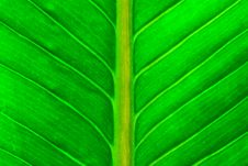 Free Fresh Green Leaf Royalty Free Stock Image - 29545176