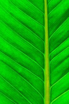 Free Fresh Green Leaf Royalty Free Stock Images - 29545209