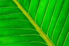 Free Fresh Green Leaf Royalty Free Stock Image - 29545236