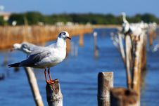 Seagull On The Pole Stock Images