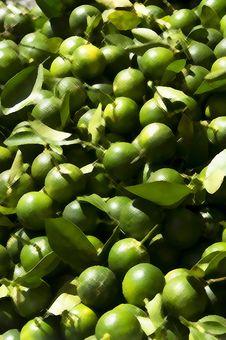 Free Calamansi Lemon Royalty Free Stock Images - 29545319