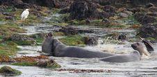 Free Seal Stock Image - 29548371