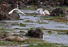 Free Seal Heron Stock Photos - 29548823