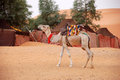 Free Camel Stock Image - 29551021