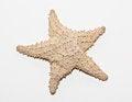 Free Starfish Stock Photos - 29569083