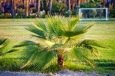 Free Palm Tree Royalty Free Stock Image - 29562966