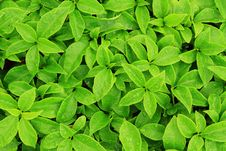 Free Green Leaf Royalty Free Stock Photo - 29565635