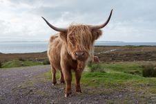 Free Cow Stock Photos - 29566833