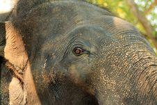 Free Asian Elephant Stock Images - 29567664