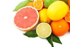 Free Citrus Fruits Royalty Free Stock Photo - 29570705