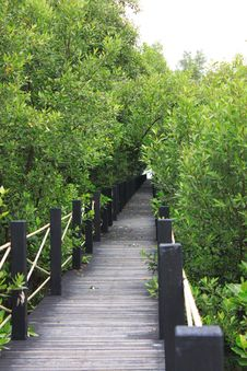 Free Ridge Walkway In Mangrove Forest Royalty Free Stock Photography - 29571107