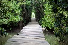 Free Swamp Tunnel Walkway Stock Photo - 29571450