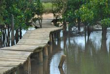 Free Wooden Walkway In Swamp Stock Photo - 29571480
