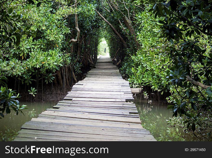 Swamp tunnel walkway