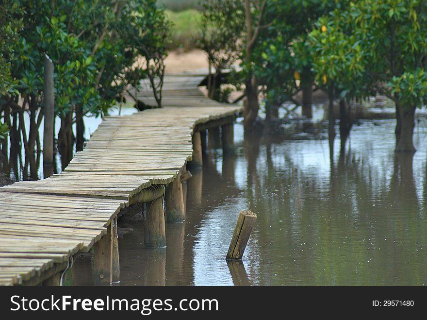 Wooden walkway in swamp