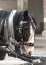 Free Horse Stock Photo - 29585550