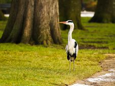 Free Bird Walking In The Park Stock Image - 29582441