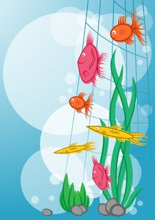 Free Floating Marine Fishes Stock Photography - 29584672