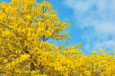 Free Yellow Flowers Stock Photography - 29587202