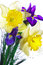 Free Bouquet Of Narcissus And Iris Royalty Free Stock Images - 29585839