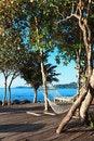 Free Hammock On The Beach. Royalty Free Stock Photography - 29590757