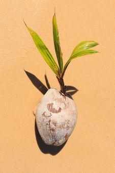 Free Coconut On The Beach Stock Photo - 29590510