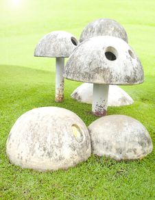 Free Mushroom In The Garden Stock Images - 29597524