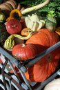 Free Fall Gourds Stock Images - 2969224