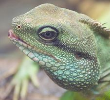 Free Asian Water Dragon 2 Stock Images - 2961144