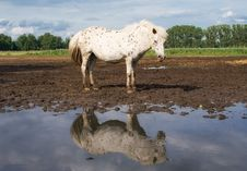 Free The Horse And Reflection Royalty Free Stock Image - 2961436
