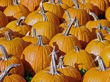 Free Pumpkins Background Royalty Free Stock Image - 2963476