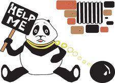Free Pandas Stock Photo - 2965180