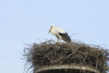 Free Stork And Nest Stock Photos - 2966643