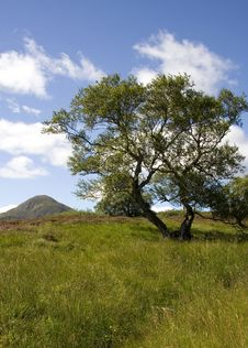 Free Tree In The Highlands Stock Image - 2967151
