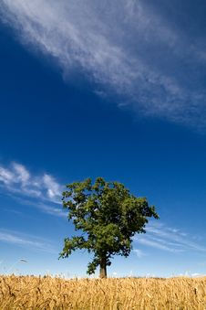 Free Green Tree And Blue Sky Royalty Free Stock Photo - 2967515
