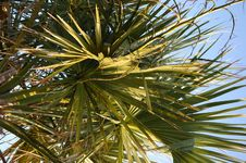 Free In The Palms Royalty Free Stock Image - 2969136
