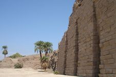 Free Egypt Series (Palm Tree Horizo Stock Photos - 2969303