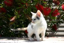 Free A Cute Kitten Stock Photos - 2969583