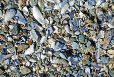 Beach Surface Covered With Broken Sea Shells Along The Laguna Beach Coastline. Royalty Free Stock Image