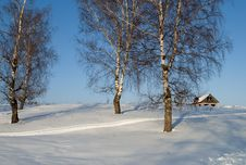 Free Bare Birches On A Hill Stock Image - 29606551