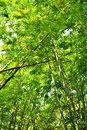Free Bamboo Forest Stock Image - 29617391