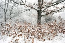 Free Forest In Snowstorm Stock Photography - 29611282