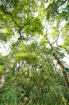 Free Rain Forest Royalty Free Stock Images - 29616089